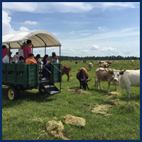 People in a Cart with Cattle